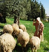 Shepherd with sheep. Nazareth Village.