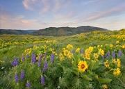 spring-meadows