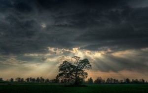 Tree with storm clouds